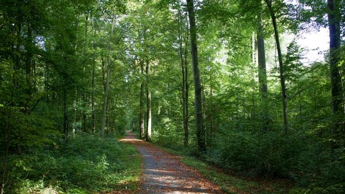 Radweg nach Bad Klosterlausnitz